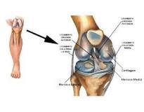 quanto custa ortopedista especialista em joelho no Jardim do Carmo